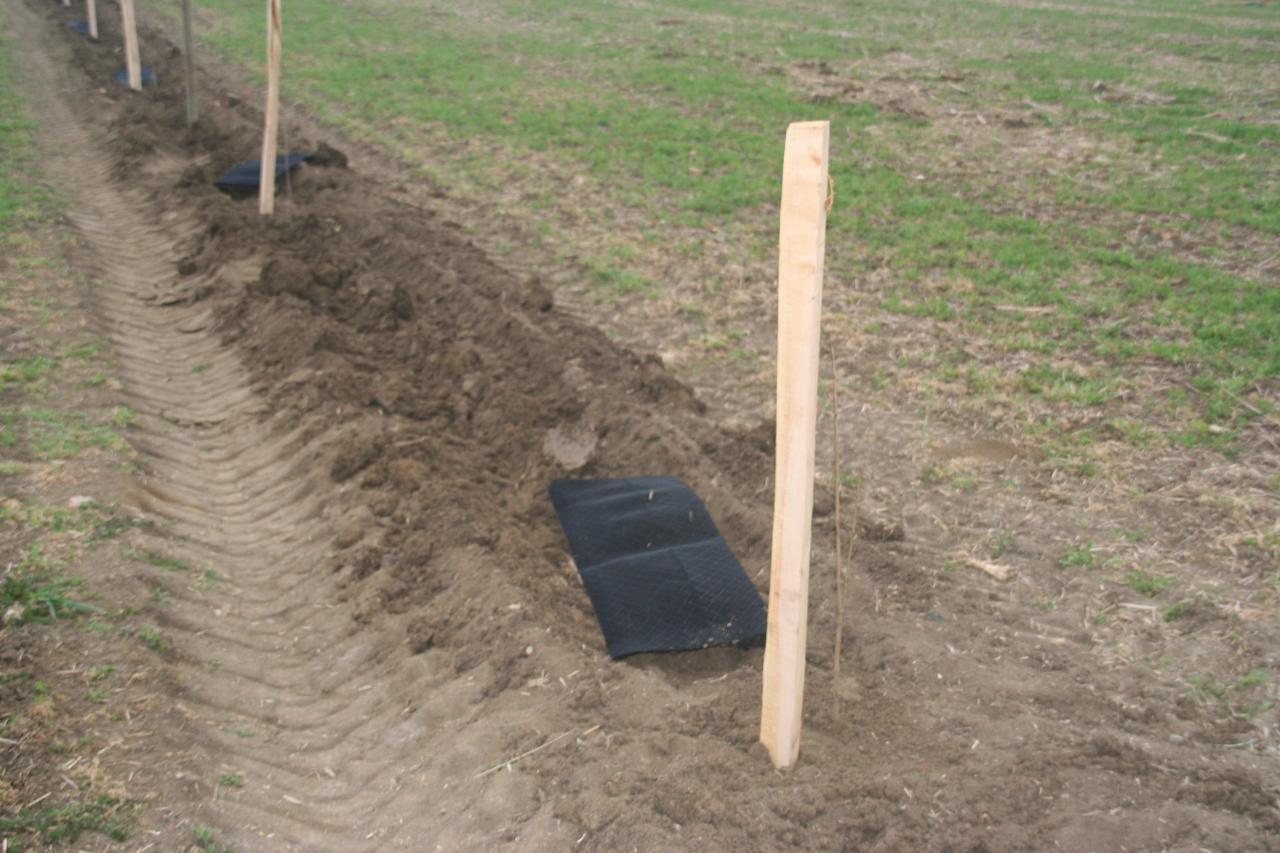 Plantations 2012